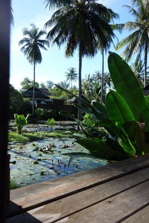 Anantara Mai Khao Phuket Villas: View from our Lagoon pool villa