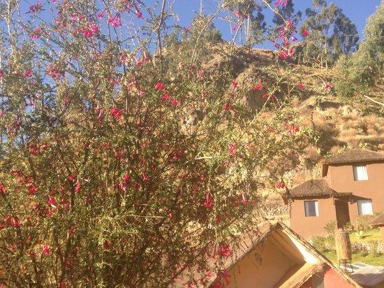 Colca Lodge Spa & Hot Springs - Hotel: Много цветущих деревьев, а на них колибри