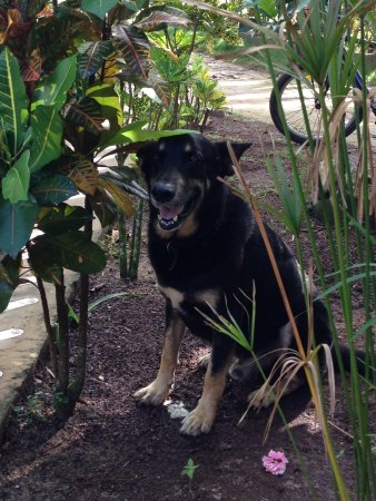 Paraiso Beach Hotel : The owners dog!