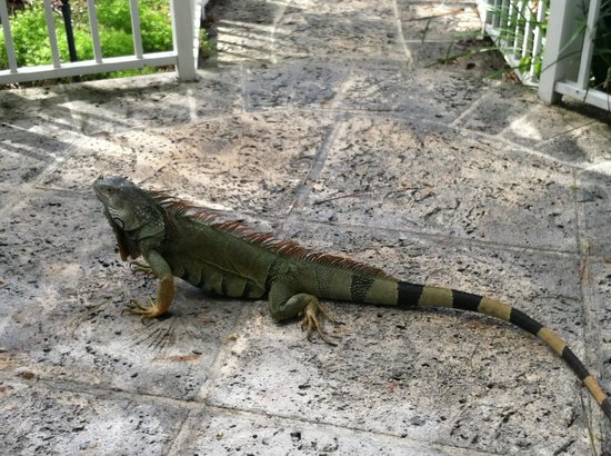 Amara Cay Resort : Visitor on our patio