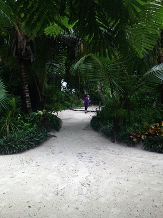 Coco Tulum : pathway to the beach