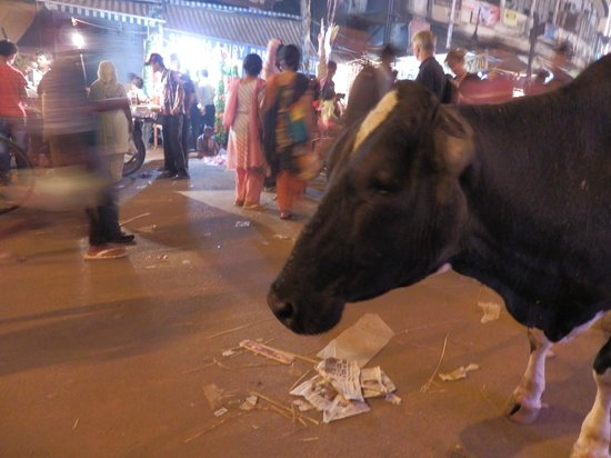 Paharganj: cows have right of way