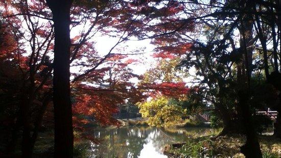 Shomyo-ji Temple: 日差しに透ける紅葉  遠目には、とてもきれいです  乾燥し過ぎがよくないんでしょうか