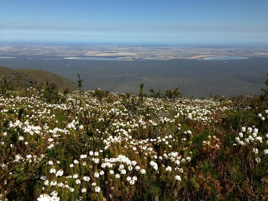 Bluff Knoll: wildflowers