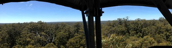 Dave Evans Bicentennial Tree: From the top