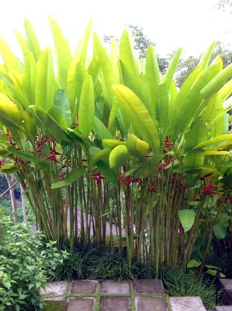 COMO Uma Ubud : Every corner of their gardens have something wonderful to look at