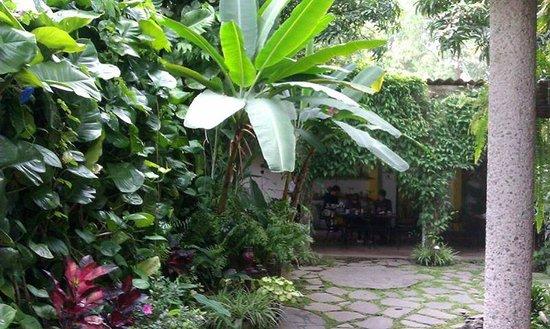 Arbol de Fuego Eco-Hotel: Beautiful setting for breakfast