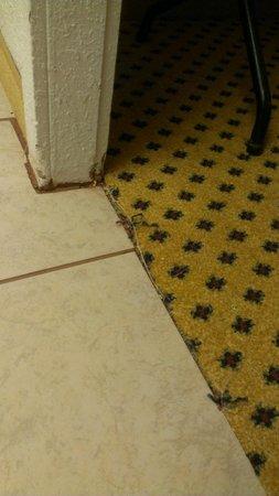 Motel 6 Fenton: Carpet