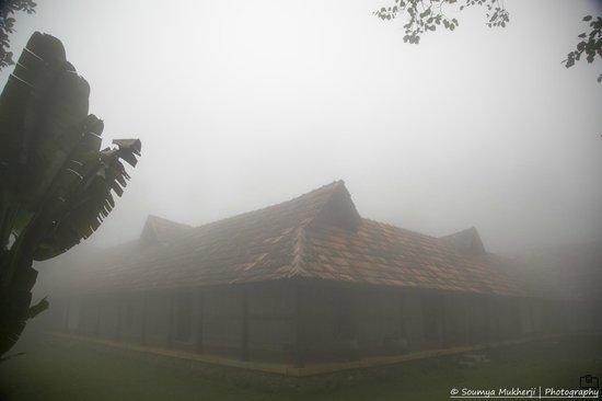 Rajakkad Estate: Early morning mist
