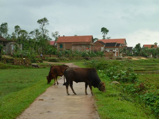 Phong Nha Farm Stay: typical sights a few steps from the farmstay