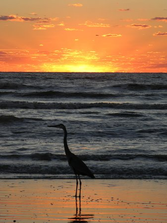 Padre Island National Seashore: Great Blue & Sunrise