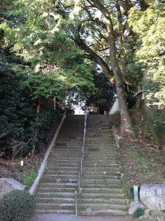 Daikoji Temple : 階段の途中に巨木があります。