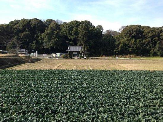 Daikoji Temple : のどかな景色の中にあるお寺です。
