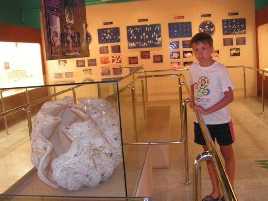 Phuket Seashell Museum : Очень большая ракушка!