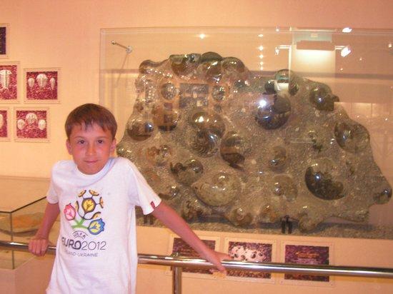 Phuket Seashell Museum : Ископаемые ракушки
