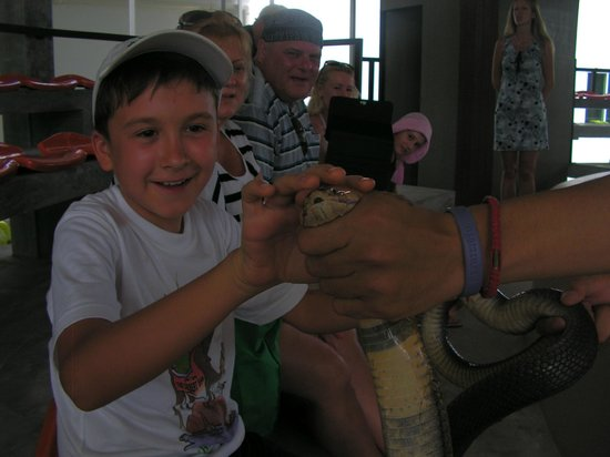 Phuket Cobra Show and Snake Farm: Можно погладить кобру!!!