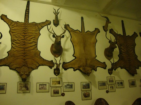 The Laxmi Niwas Palace: Games Room wall decorated with the Hunting Trophies