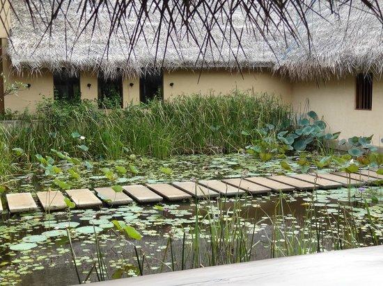 Jetwing Vil Uyana: passage pour se rendre à la piscine et au restaurant