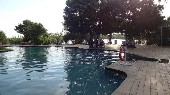 Cinnamon Wild Yala : Immense  piscine