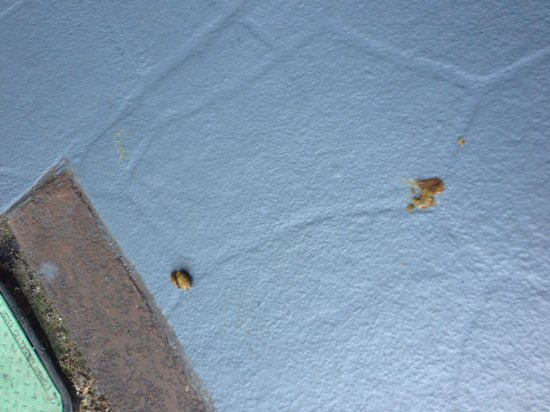 Sheraton Lake Buena Vista Resort : One of many dog feces I saw in the grounds of the hotel.  Yuck!!