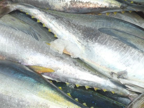 The Mooring: fresh yellowfin tuna from the morning fishing trip
