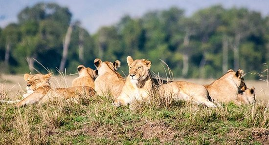 Governors' Il Moran Camp: Relaxing in the Masai Mara