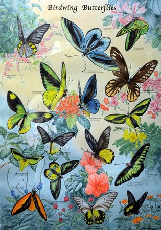 Butterfly Park & Insect Kingdom: Artwork near the exit
