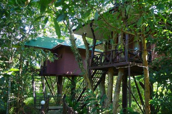 Khao Sok Paradise Resort: like a monkey in the jungle... just like !