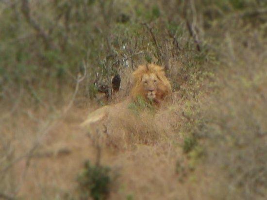 Amakhosi Safari Lodge: distant