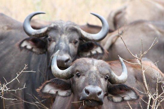 Amakhosi Safari Lodge : curious