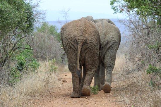 Amakhosi Safari Lodge: bye