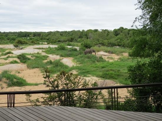 andBeyond Leadwood Lodge : Elefant vom Viewing deck aus