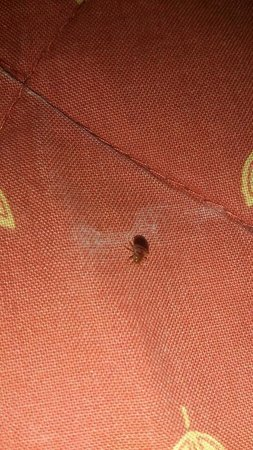 The Lonsdale Hotel: Bed bug