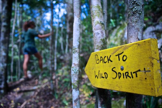 Wild Spirit Lodge and Backpackers: On one of the tracks