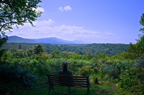 Wild Spirit Lodge and Backpackers: Bee Keepers Cottage view