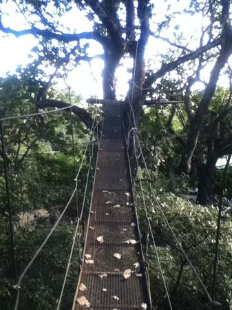 The Congo Trail Canopy Tour: Suspension Bridges