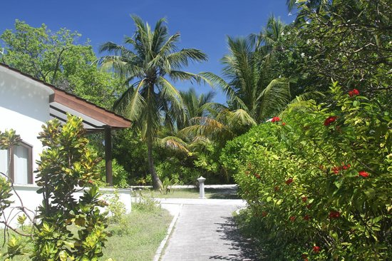 Bandos Maldives: 部屋からの眺め