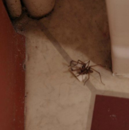 Best Western Leigh Park Hotel: Leigh Park Huntsman spider