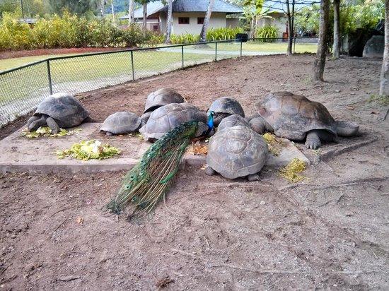 Constance Ephelia : Tortoises