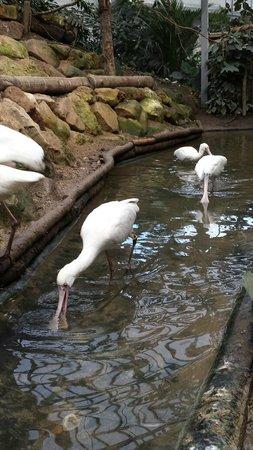 Biotropica la Serre Zoologique : birds