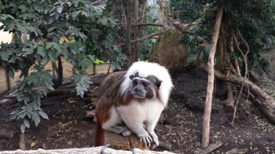 Biotropica la Serre Zoologique : little monkeys