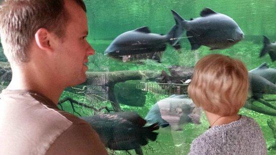 Biotropica la Serre Zoologique : fish