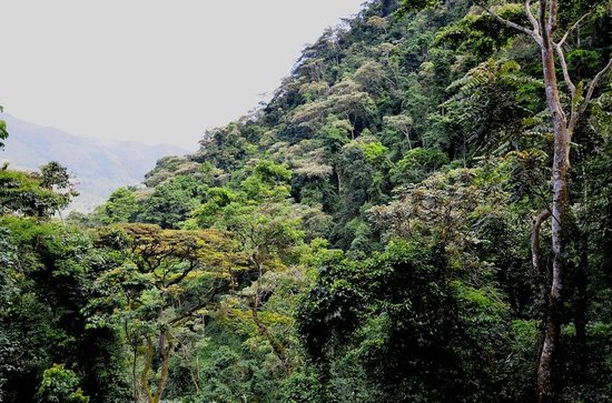 Mahogany Springs : Bwindi forests
