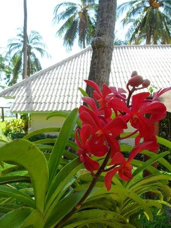 Cape Panwa Hotel: Орхидеи