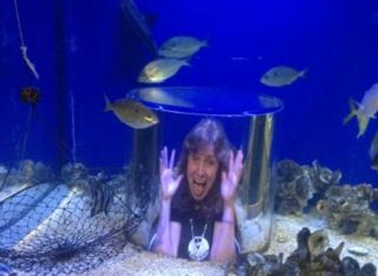 Hotel Monteleone : At the Aquarium of the Americas