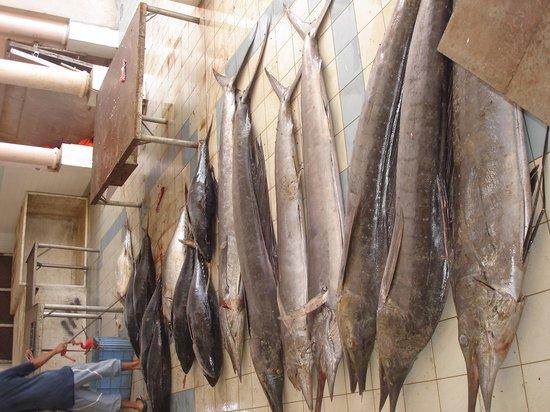 Tuna fish awaiting buyers at Nizwa Souk - Picture of Nizwa Souk