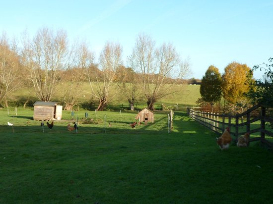 Park Farm Barn Bed & Breakfast: looking out from the barn window....