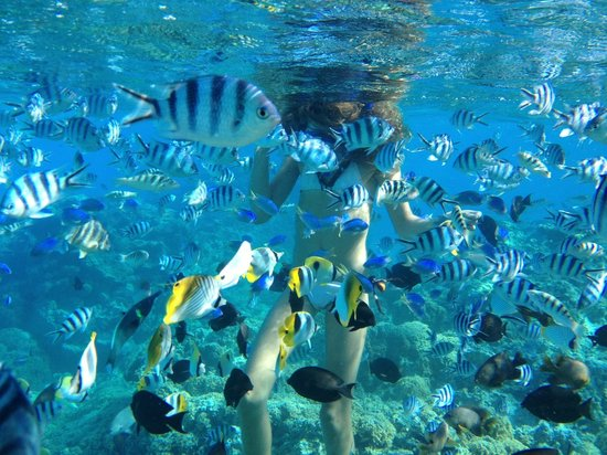 Reef Discovery: snorkeling with Fabien