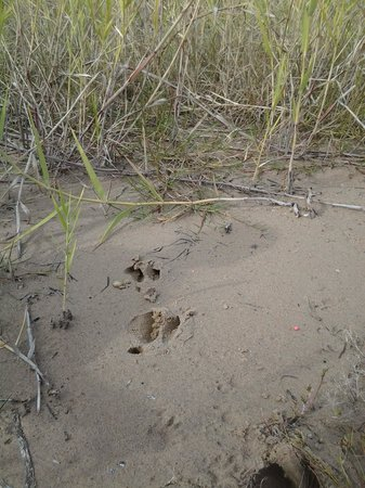 Lake Somerville State Park - Birch Creek Unit : tracking deer AND racoons along the lake