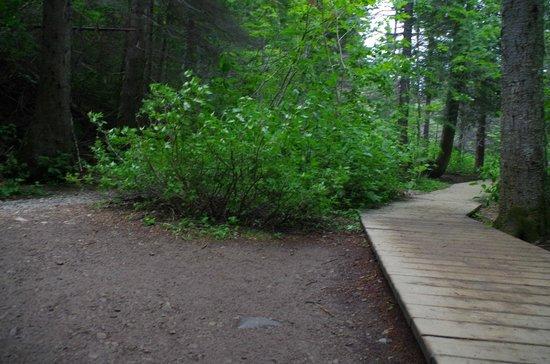 Forillon National Park: Sentier de la Chute